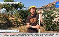«Украинская Болгария»: Сколько заробитчанам платят за адский труд в местной деревне