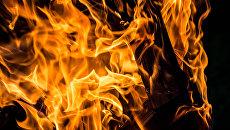 «Партизанский отряд с предателем»: Три украинца в Польше подожгли птицефабрику, один из них сразу сдал подельников