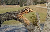 Дерево рухнуло на отдыхающих в санатории подо Львовом, пострадали люди