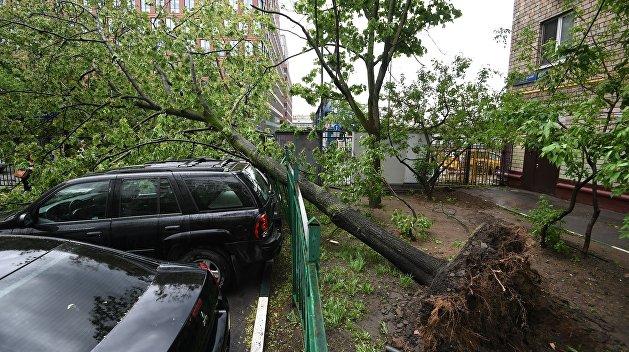 От урагана в Москве погибли восемь человек