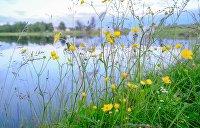 Крупнейшее озеро Украины поставили на грань исчезновения