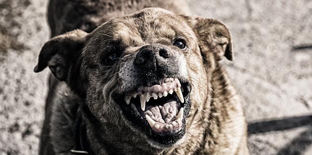 Массовую драку с участием собаки устроили отдыхающие курортного поселка на Херсонщине