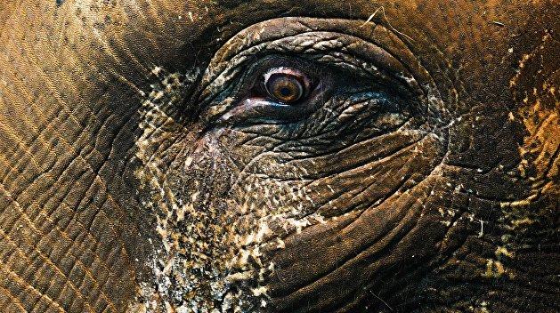 «Украина превращается в Африку»: харьковчан напугали разгуливающие по городу слон и агрессивная лиса
