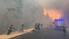 Страна в огне: на Украине в три раза увеличилось количество лесных пожаров