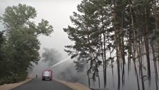 Верховная Рада поддержала ужесточение наказания для поджигателей лесов