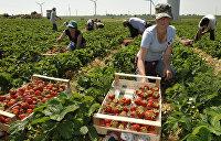 Куда податься бедному мигранту? Западная Европа ждет заробитчан с Украины