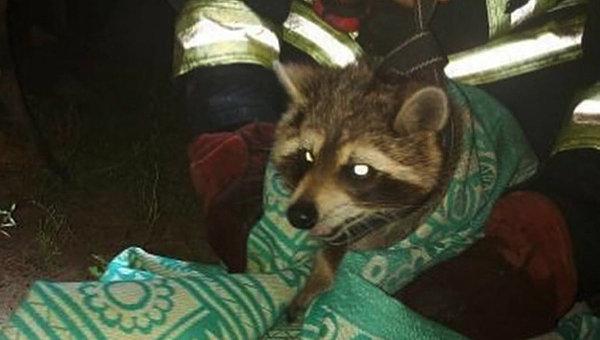 Под Днепром четверо спасателей помогли еноту