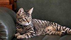 Львовяне проголосовали за имя главного кота горсовета