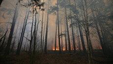 «Это не самое страшное». Эксперт о том, могут ли пожары в Чернобыле добраться до хранилищ с отходами