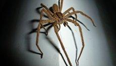 На Украине активизировались опасные пауки, пострадали люди