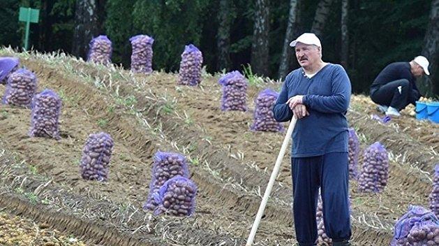 Белоруссия и украинская картошка. История одной сенсации