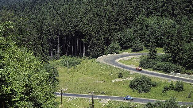 На Закарпатье задумались о декоммунизации леса