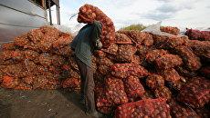 Своей нет, из России нельзя. На Украине — беда с картошкой