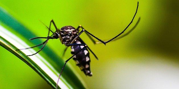 Проверяли на COVID-19: украинка умерла от малярии