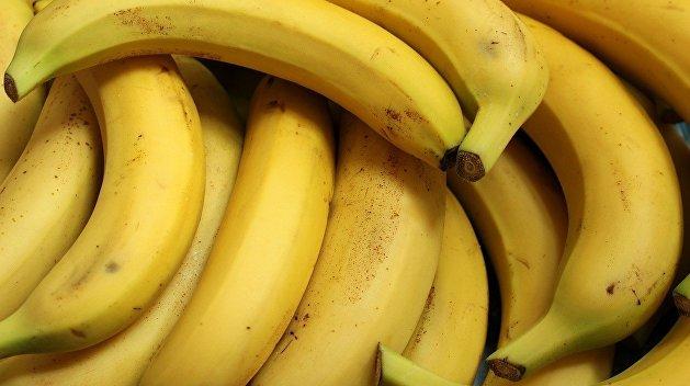 Всему виной бананы: эскалаторы киевского метро останавливались почти 600 раз за месяц