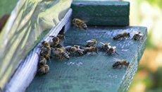 Рой пчел насмерть закусал пасечника из Ровенской области