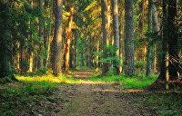 Мифы и легенды дремучих белорусских пущ — Беловежской, Налибокской и Голубицкой
