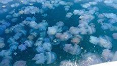 «Выставим счет»: украинский губернатор обвинил в нашествии медуз Россию