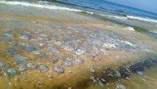 Депутат Госдумы РФ назвал деградацией требование Украины о компенсациях из-за медуз