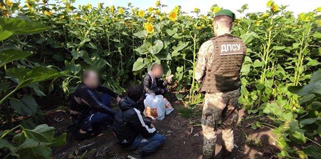 На Украине произошло необычное задержание в подсолнухах