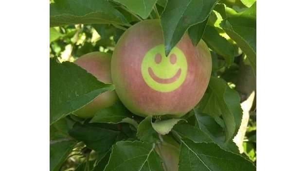 На Украине ко Дню независимости вырастили яблоки с трезубцами