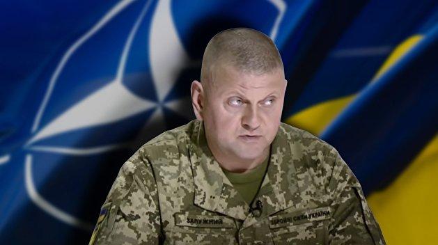 Почему Западу не нужно вступление Украины в НАТО