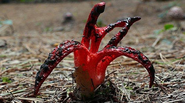 Во Львовской области грибники в лесу наткнулись на «пальцы дьявола»