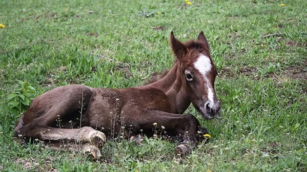 По Тернополю гуляли буйволы и пони из зооуголка, где нашли сибирскую язву